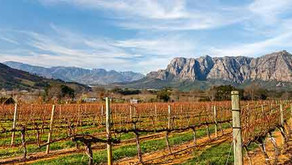 Wine Review: Pinotage   (By Dr. Colin Kaye)