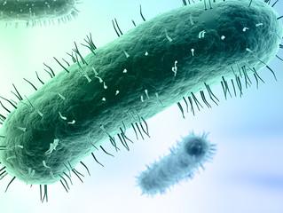 'No evidence' imported frozen semen cause of mycoplasma outbreak