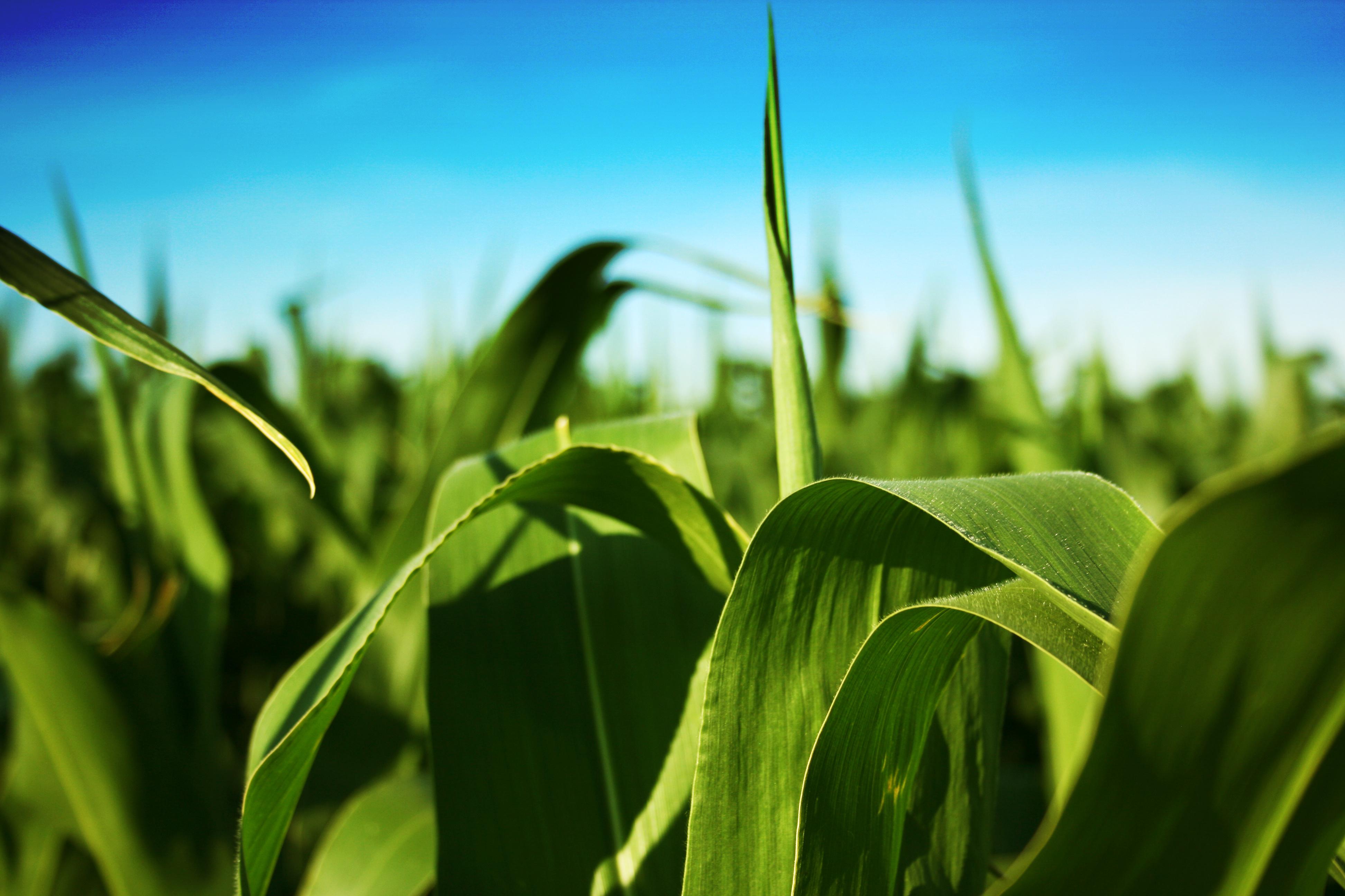 Liquid Fertilizer | Liquid Calcium | InstaGro | Caledonia OH
