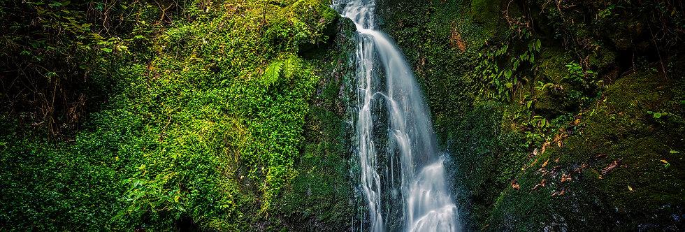 Waterfall Serene