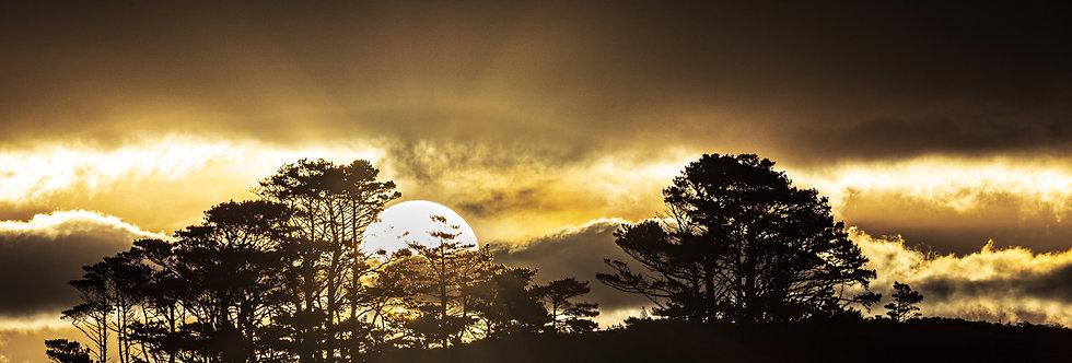 A Covid Sun