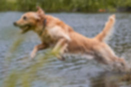 DSC_2628 Max leaping into water 2019.jpg