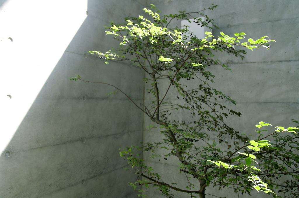 樹木也能生長的地下室