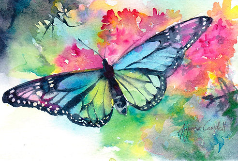 Rainbow Monarch 3