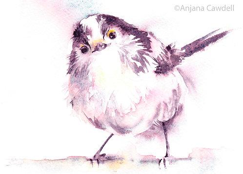 Bird Card, Blank Greetings Card