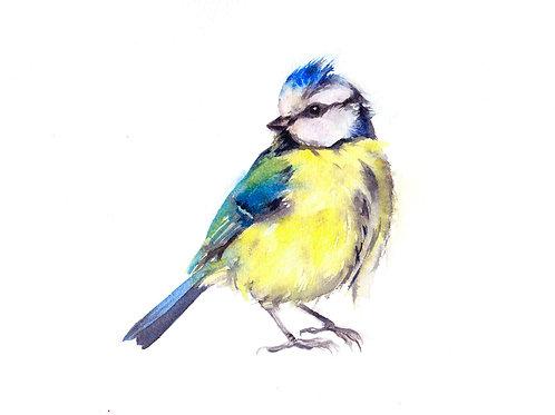 Blue tit - Original Watercolour Painting