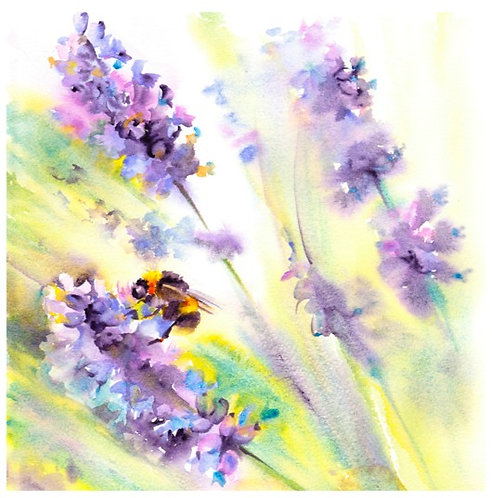 Bee on lavender, Open edition giclée print