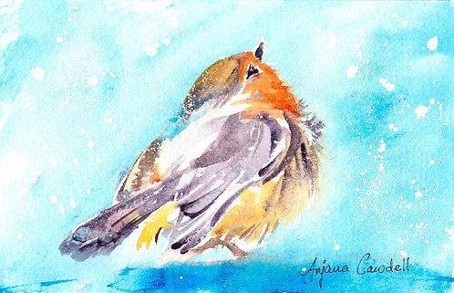 Robin in Snow (Framed)