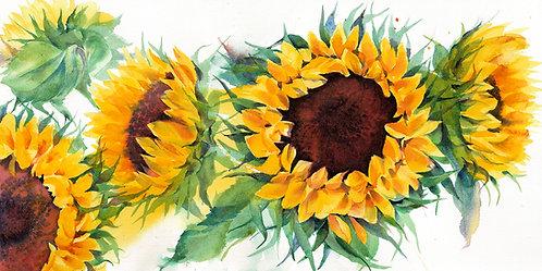 Sunflowers, Limited Edition Giclée Print