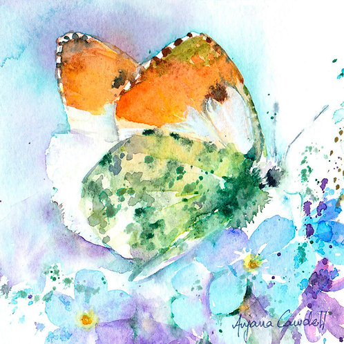 original butterfly painting, orange-tip