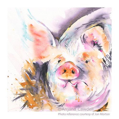 Pig, Original Watercolour Painting