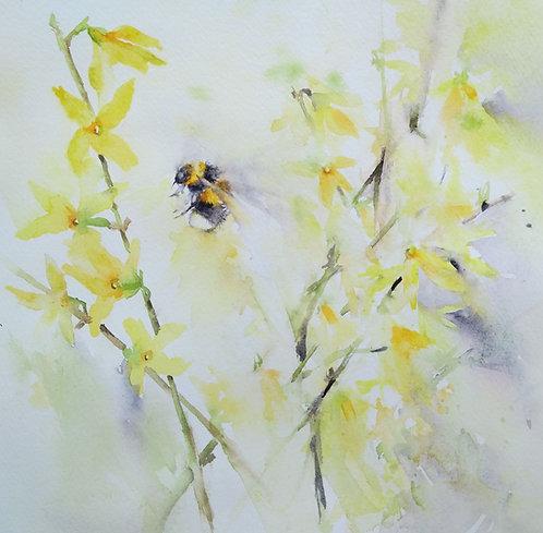 Bumblebee amongst forsythia