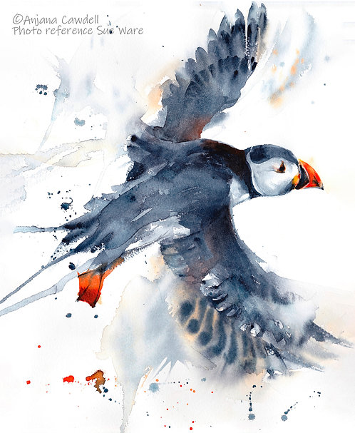 Puffin in flight, Limited Edition Gicléee Print