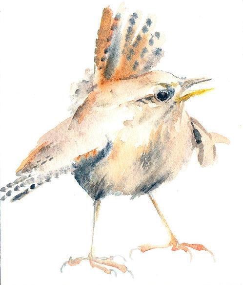 Chatty Wren 2, Framed Original Bird Painting
