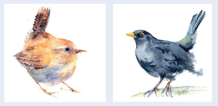 Wren and Blackbird