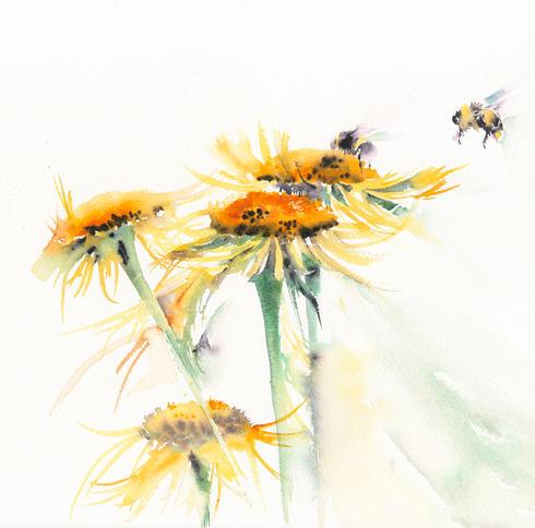 Bees on shaggy daisy