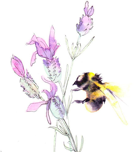 Bumblebee on French lavender
