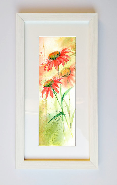 Echinacea, Framed Original Watercolour Painting
