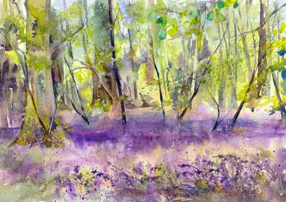 Bluebells at Oldmoor Wood