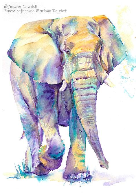 African Elephant, Limited Edition Giclée Print