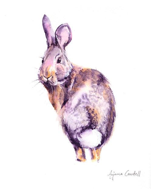 Rabbit, Original Watercolour Painting