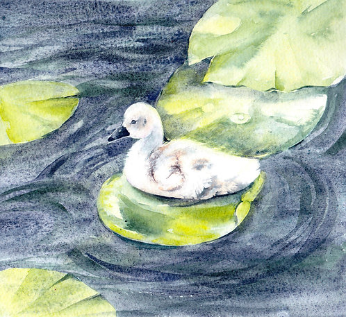Signet, Original Watercolour Painting