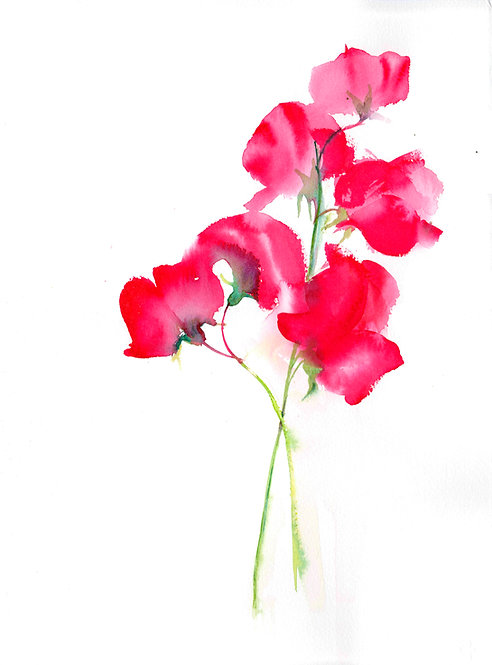 Red Sweetpea