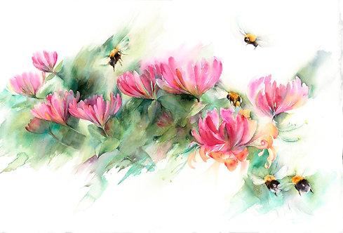 Bumblebees on honeysuckle