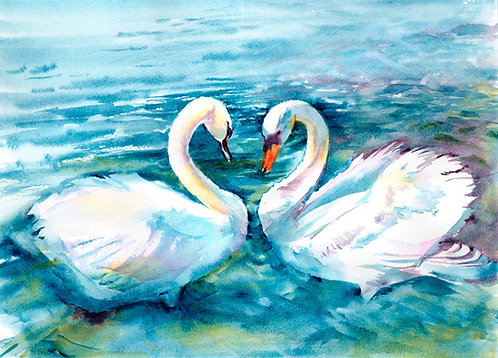 Swans, Original Watercolour Painting