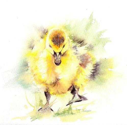 Gosling, original watercolour painting
