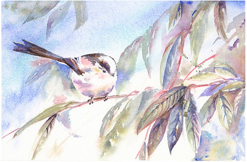Long Tailed Tit, Limited Edition Giclée Print