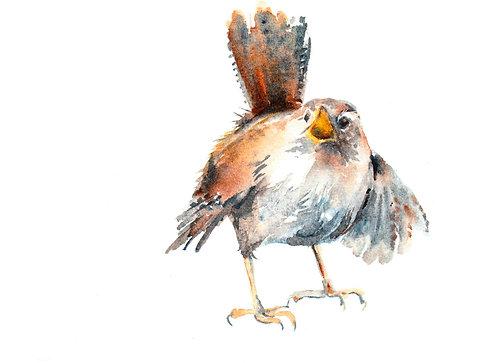 Chatty Wren 1, Framed Original Bird Painting