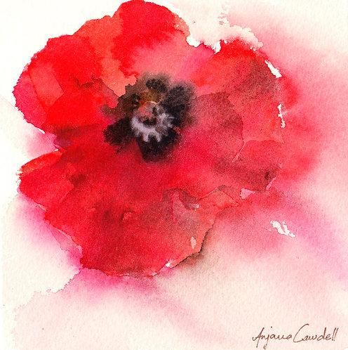 Poppy (mini paintings, ACEO)
