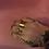 Thumbnail: Big Brass ring