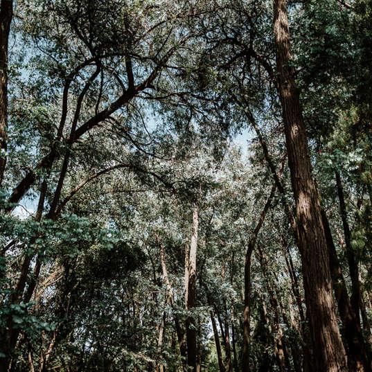 El Campirano Bosque