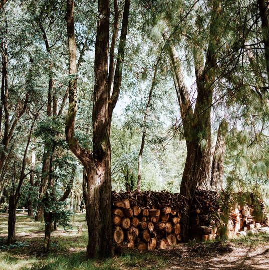 El Campirano|Bosque