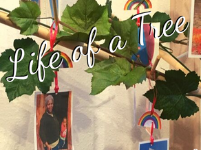Blog - The 'Life of a Tree' at Monton
