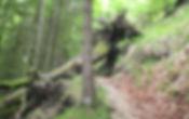 Felssturz Untersberg 2015 - Baum ueber W