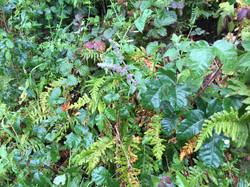 Poison Oak is Beautiful...