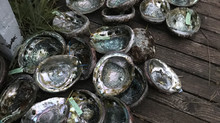 Abalone Season closed for 2018