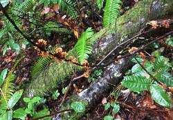 False Turkeytail Fungus Flowers