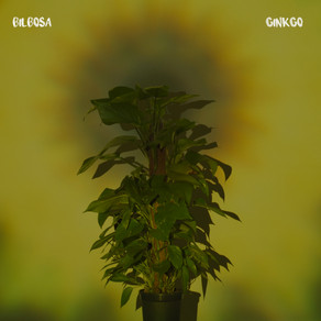 New release: Bilbosa - Gingko