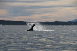 Whale in bay