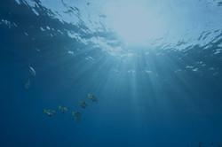 Air laut