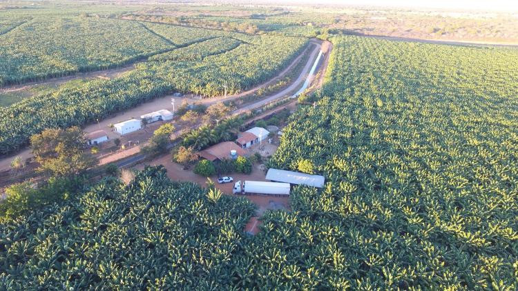 Vista aérea da plantação de banana em Bom Jesus da Lapa, no semiárido da Bahia