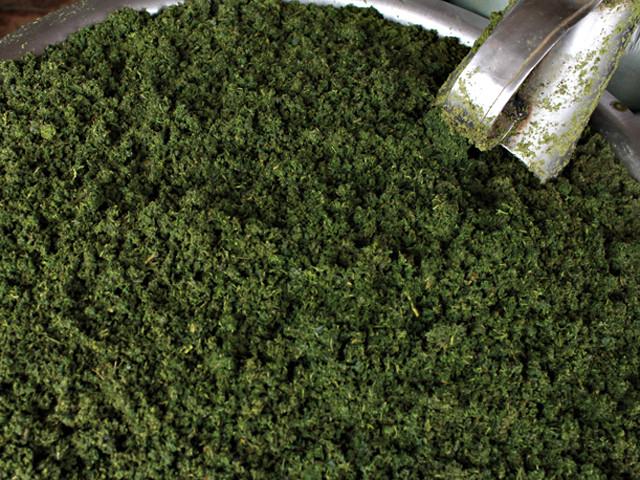 A maniva é a folha da mandioca moída, tradicionalmente usada na culinária paraense (Foto: Ronaldo Rosa)
