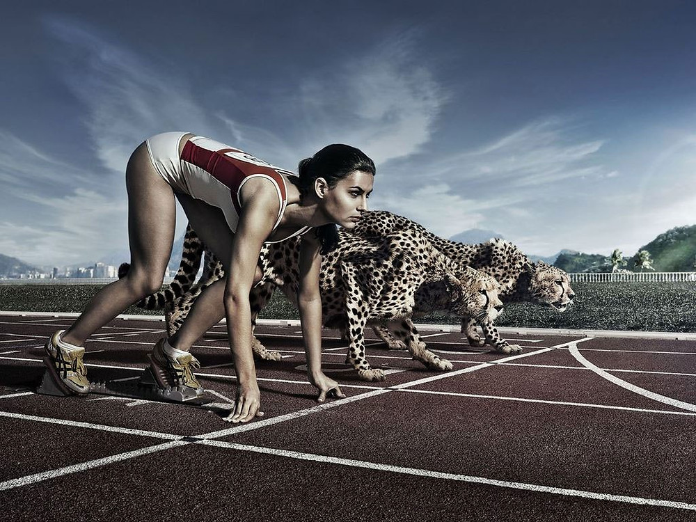 correndo contra guepardo.jpg