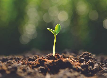O milagre do crescimento orgânico