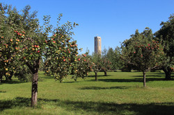 Abbey Orchards