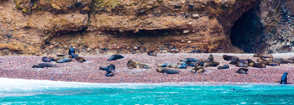 Ballestas Island 2.jpg